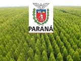 Parana tem a melhor industria de base florestal do Brasil_Capa