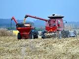 Agropecuaria Paranaense cresce acima da inflacao