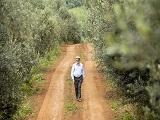 Portugues produz primeiro azeite extra virgem de oliva 100% paranaense_Capa