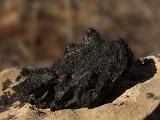 Carvão Vegetal_Capa